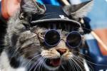 chats_lunettes_020