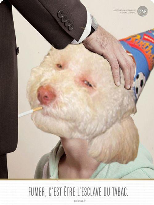 Stoned birthday dog - photo#24