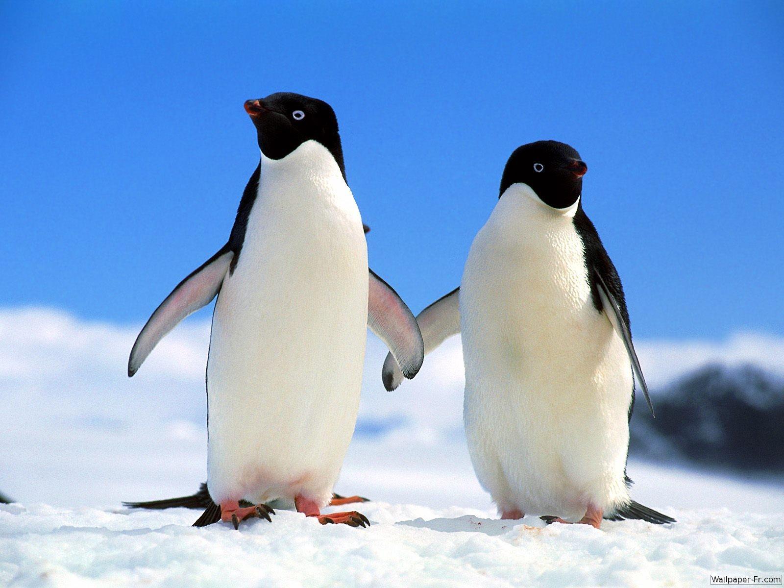 top 10 des publicit s avec des pingouins les plus dr les ou avec des manchots on sait pas trop. Black Bedroom Furniture Sets. Home Design Ideas