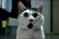 Com_Hem_Sommar_2010_Omg_Cat_stoppweb_16x9