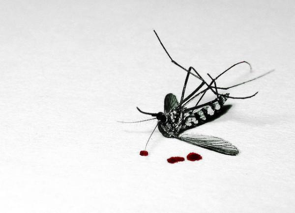Top 10 des manières de te débarrasser du moustique qui te bousille ta nuit