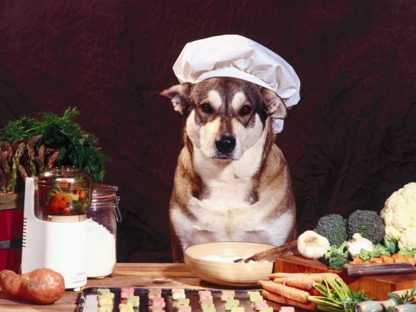 Ma nouvelle cuisine glauque Chien-cuisto-e1348131693339