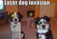 laserdog