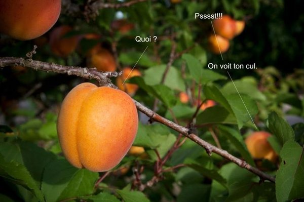 prise-choux-007