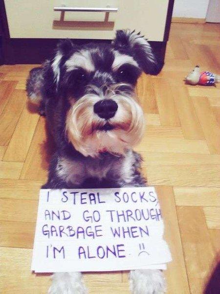 Top 25 des meilleurs « Dog Shaming » (ou quand les chiens