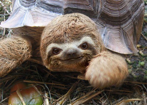 paresseux tortue_resultat