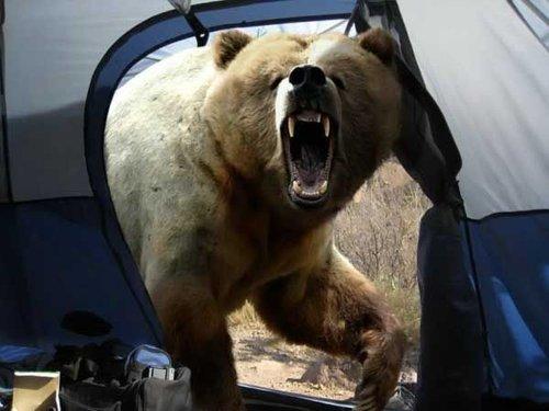 campiny-bears-funny