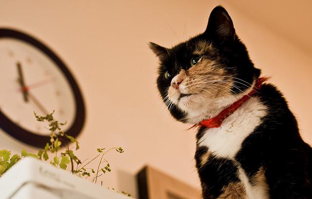 signes fin de vie chat