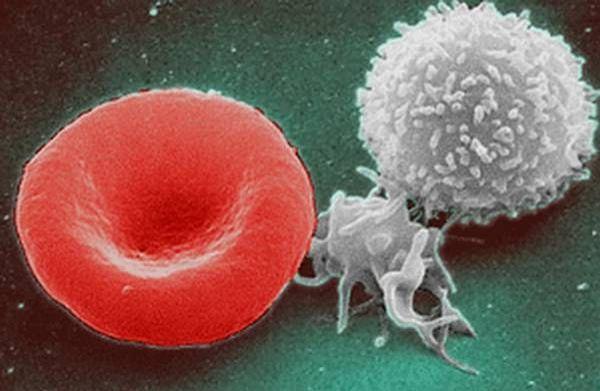 globule-blanc-rouge