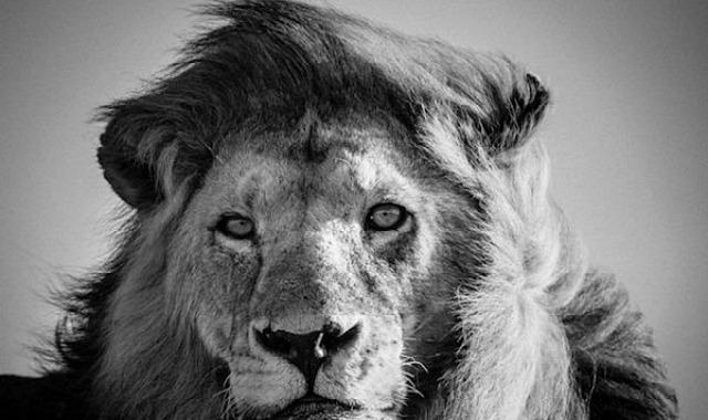top 15 des plus belles photos d 39 animaux d 39 afrique par. Black Bedroom Furniture Sets. Home Design Ideas