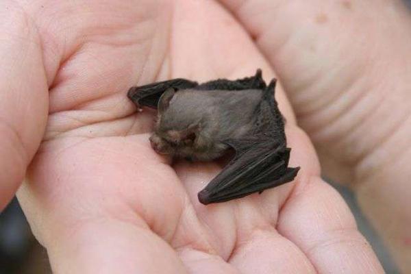 bumblebee-bat-3