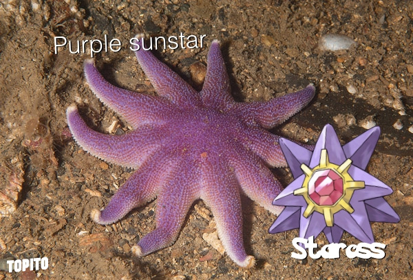 starross