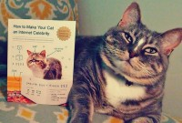 cat.celebrity