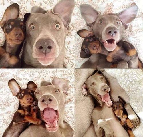 chiens.selfie