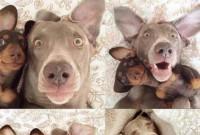 chiens.selfie.jpg