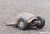 une_tortue
