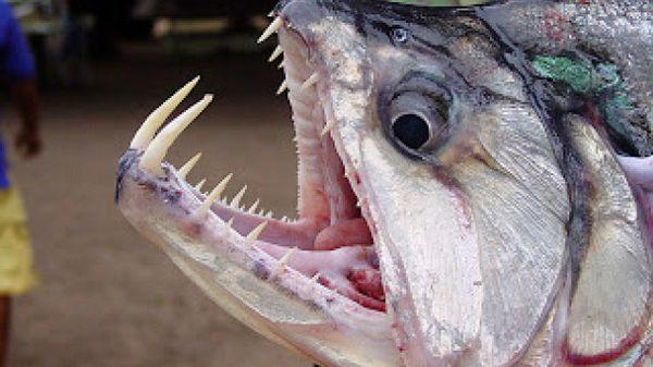 poisson.vampire_resultat