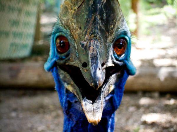 velociraptor_resultat