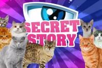 secret-cat