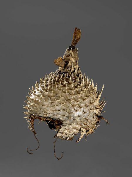 un casque à partir de porcupinefish_resultat