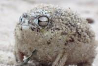 une_grenouille_papouille