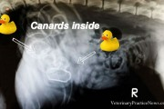 canard-rayon-x
