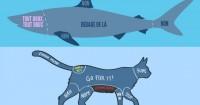 carresser-animaux