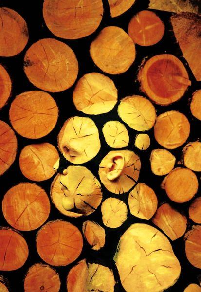 cutten_trees_fs_resultat
