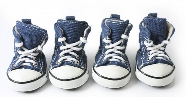 Des chaussures pour chiens qui ressemblent méchamment à des Converse