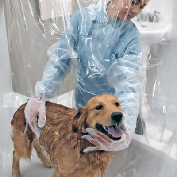 douche-chien
