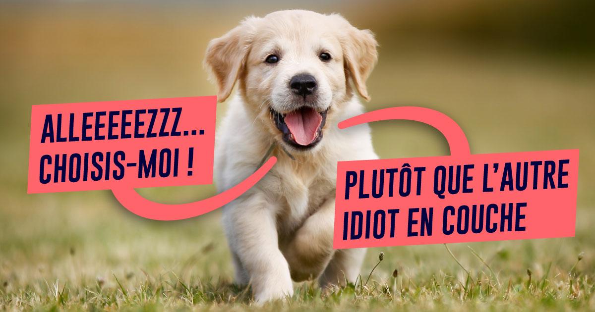 Top 10 des raisons d'adopter un chien plutôt que de faire