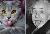 cat-looks-like-other-thing-lookalikes-celebrities-28__700_resultat
