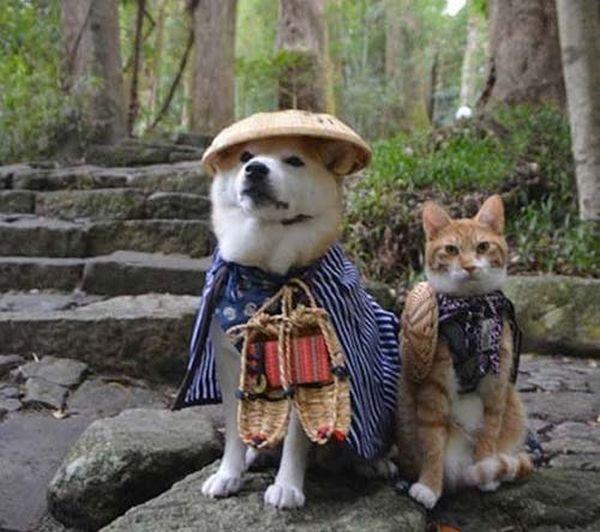 chat-chien-ninjas_resultat