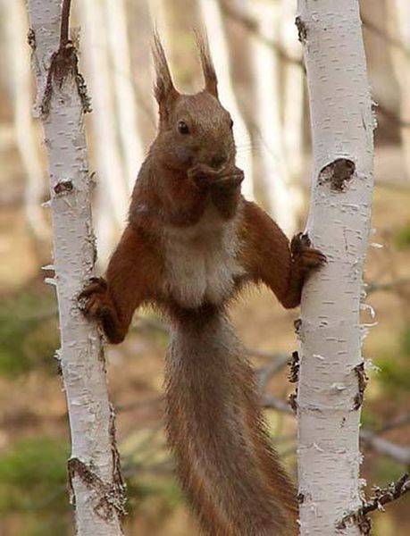 ecureuil-ninja_resultat