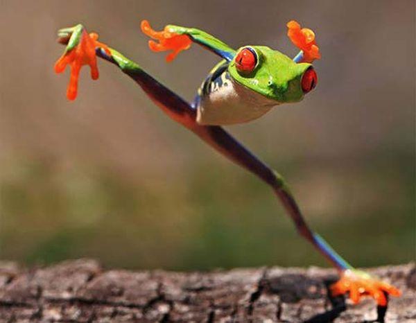 grenouille-ninja_resultat