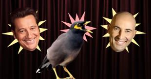 une-oiseau