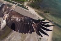 eagle-960x540