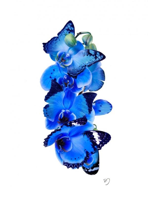 Butterfly-NectarFlower