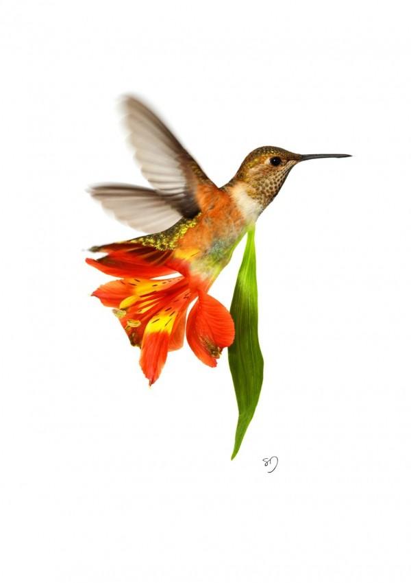 HummingbirdFlower
