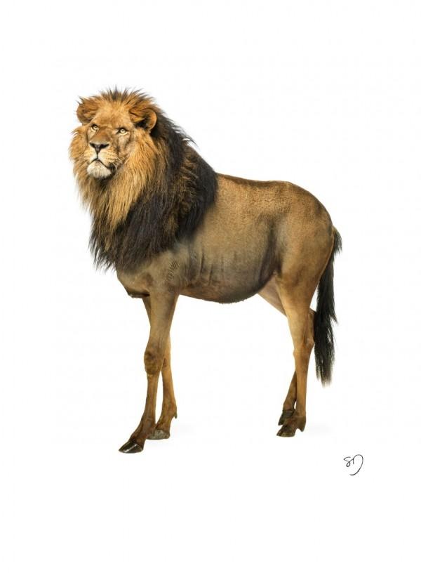 LionWildebeest