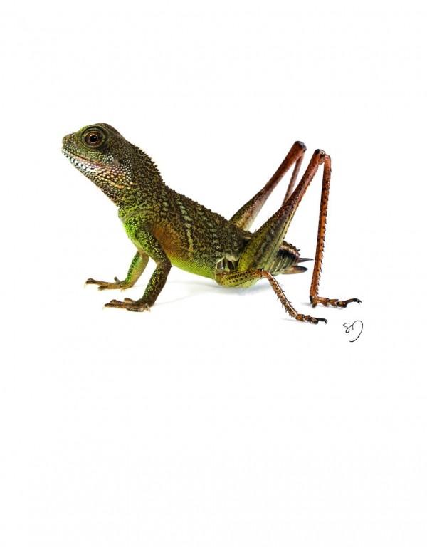 LizardCricket