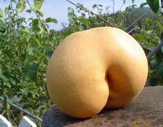 fruitpenis13
