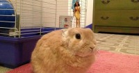 stuff-rabbit