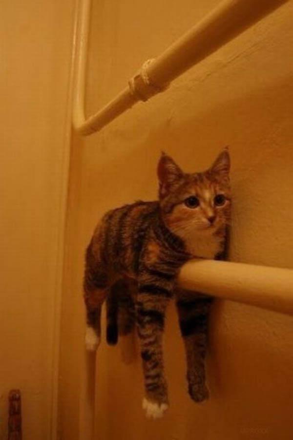 gatos-posturas-30