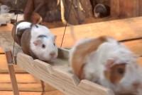 une_cochon
