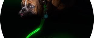 Squeaker_Poochlight_Green_LED_Light_Up_Leash_9f0af0c4-bd65-4fc1-a473-8e6e9045ce23