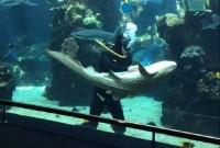 UNE_requin
