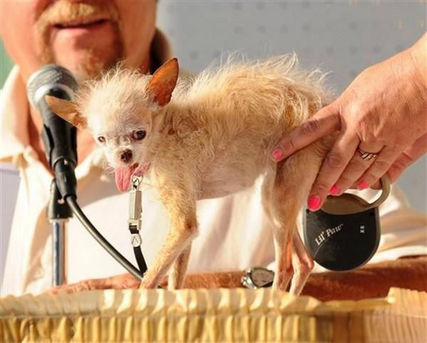 Ugly_Dog_Contest__mschulte@kcstar.com_20