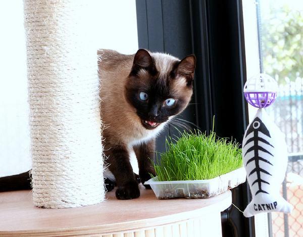 chat-louche