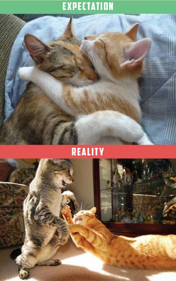 chat-vs-realite-2